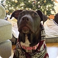 Adopt A Pet :: Yogi - Villa Park, IL