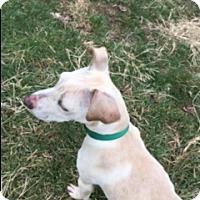 Adopt A Pet :: Luna - New Philadelphia, OH