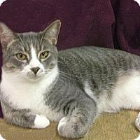 Adopt A Pet :: Bogart - Ridgecrest, CA