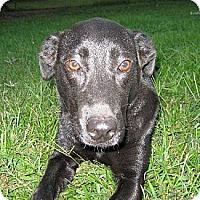 Adopt A Pet :: Pepper - Brattleboro, VT