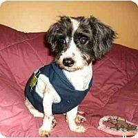 Adopt A Pet :: Jesse - Mooy, AL