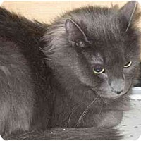 Adopt A Pet :: Smokey - Jenkintown, PA