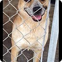 Adopt A Pet :: Rosie - Fowler, CA