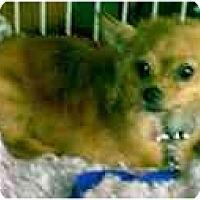 Adopt A Pet :: Kitty - dewey, AZ