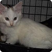 Adopt A Pet :: Tracey - Acme, PA
