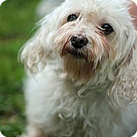 Adopt A Pet :: Alexia - Tinton Falls, NJ