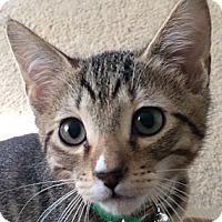 Adopt A Pet :: Dale - Winchester, CA