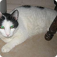 Adopt A Pet :: Harvey - Glendale, AZ