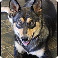 Adopt A Pet :: Riada - Rockwall, TX