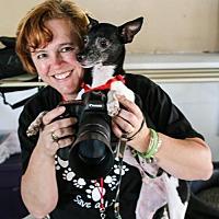 Rat Terrier Dog for adoption in Elizabethtown, Pennsylvania - Radar