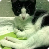 Adopt A Pet :: CESILY - Ridgewood, NY