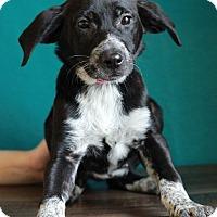 Adopt A Pet :: Haylee - Waldorf, MD