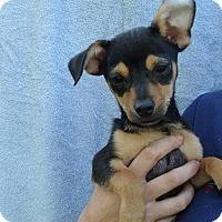 Adopt A Pet :: Tim - Oviedo, FL