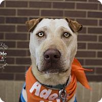 Adopt A Pet :: Kahuna - Mooresville, NC