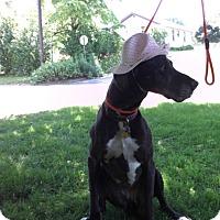 Adopt A Pet :: Ophelia - Baden, PA