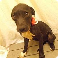 Adopt A Pet :: UNO - Upper Marlboro, MD