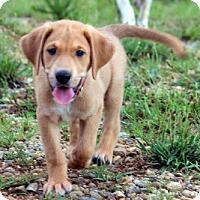 Adopt A Pet :: Pound Kake - Atlanta, GA