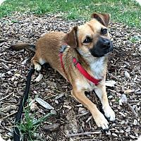 Adopt A Pet :: Roger - Woodland, CA