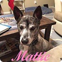 Adopt A Pet :: Mattie - Friendswood, TX