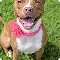 Adopt A Pet :: 1608-1723 Dazzle (Roxy) - Virginia Beach, VA