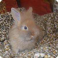 Adopt A Pet :: Olaf- 1 lb. - Warwick, NY