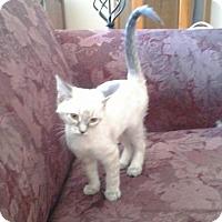 Adopt A Pet :: Tosh - White Bluff, TN