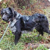 Adopt A Pet :: Twilight - Westminster, MD