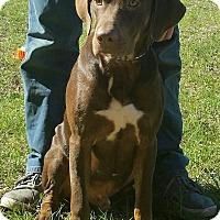 Adopt A Pet :: Newf - Chiefland, FL