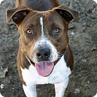 Adopt A Pet :: Arnie - Santa Maria, CA