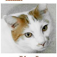 Adopt A Pet :: Killian - Seaford, DE