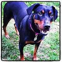 Adopt A Pet :: Myra - Salem, OR
