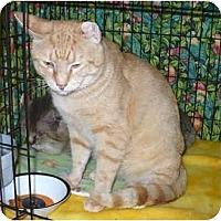 Adopt A Pet :: Julius - Colmar, PA