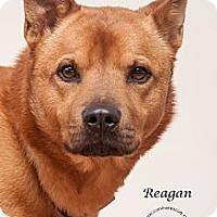 Adopt A Pet :: Reagan - Westfield, NY