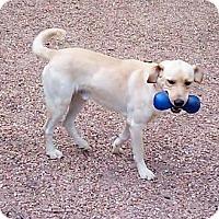 Adopt A Pet :: Zach - Spring, TX