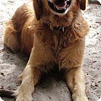 Adopt A Pet :: Hennessy - Murdock, FL