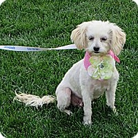 Adopt A Pet :: **LAUREL** - Stockton, CA