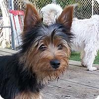 Adopt A Pet :: Tobie - Russellville, KY