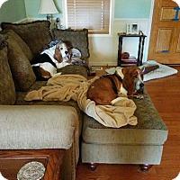 Adopt A Pet :: Emma - Columbia, SC