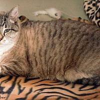 Adopt A Pet :: Earl - St Louis, MO