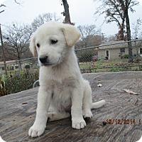 Adopt A Pet :: Polar - Adopted! - Ascutney, VT