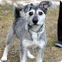 Adopt A Pet :: Wesley - Tinton Falls, NJ