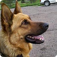 Adopt A Pet :: Theodore - Denver, CO