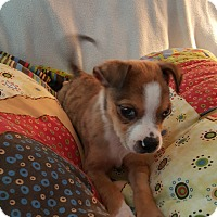 Adopt A Pet :: Babou - Marietta, GA