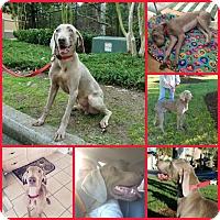 Adopt A Pet :: Newman - Davenport, FL