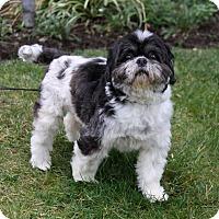 Adopt A Pet :: THURMAN - Newport Beach, CA