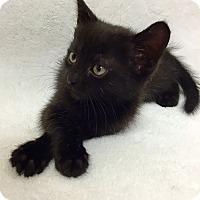 Adopt A Pet :: Lara - Mission Viejo, CA