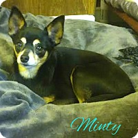 Adopt A Pet :: Minty - House Springs, MO