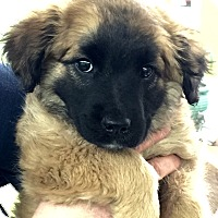 Adopt A Pet :: RUBY - beautiful & friendly - Stamford, CT
