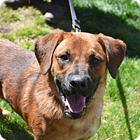 Adopt A Pet :: Duke - Danbury, CT
