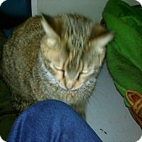 Adopt A Pet :: Luella - Colbert, GA